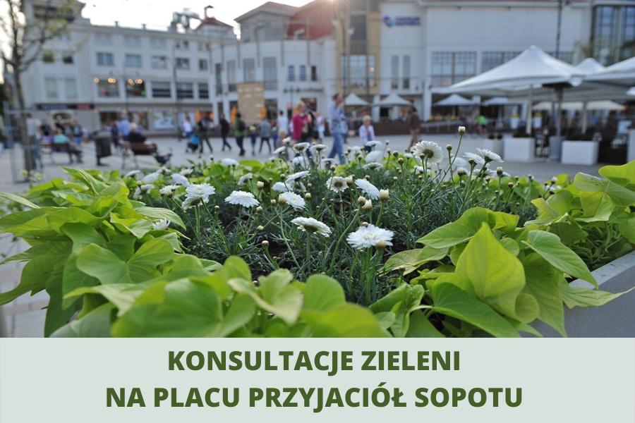 Konsultacje zieleni na Placu Przyjaciół Sopotu